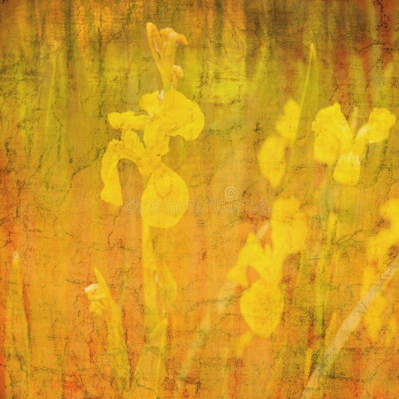 Motivo astratto del daffodil della priorità bassa fotografia stock