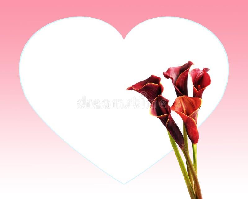 Motivo del amor con las calas imagen de archivo libre de regalías