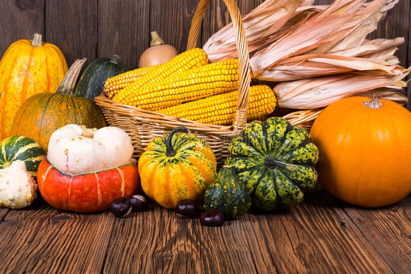 Motivo di Autumn Thanksgiving con un canestro pieno con le pannocchie di granturco e zucche e castagne variopinte differenti su u immagini stock libere da diritti