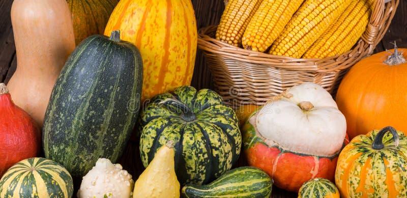 Motivo di Autumn Thanksgiving con un canestro pieno con le pannocchie di granturco e le zucche variopinte differenti fotografie stock libere da diritti