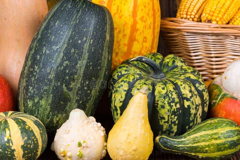 Motivo di Autumn Thanksgiving con un canestro pieno con le pannocchie di granturco e le zucche variopinte differenti immagini stock libere da diritti