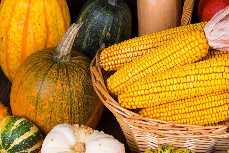 Motivo di Autumn Thanksgiving con un canestro pieno con le pannocchie di granturco e le zucche variopinte differenti fotografia stock