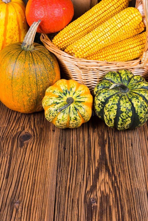 Motivo di festival del raccolto di autunno con due zucche differenti di gorgonzola ed altri davanti ad un canestro con le pannocc fotografia stock