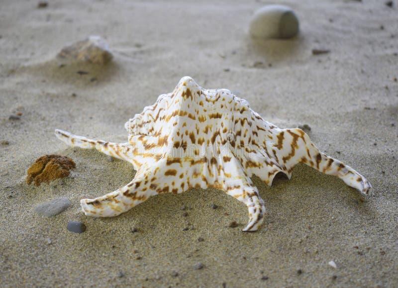 Motley раковины моря стоковые фото