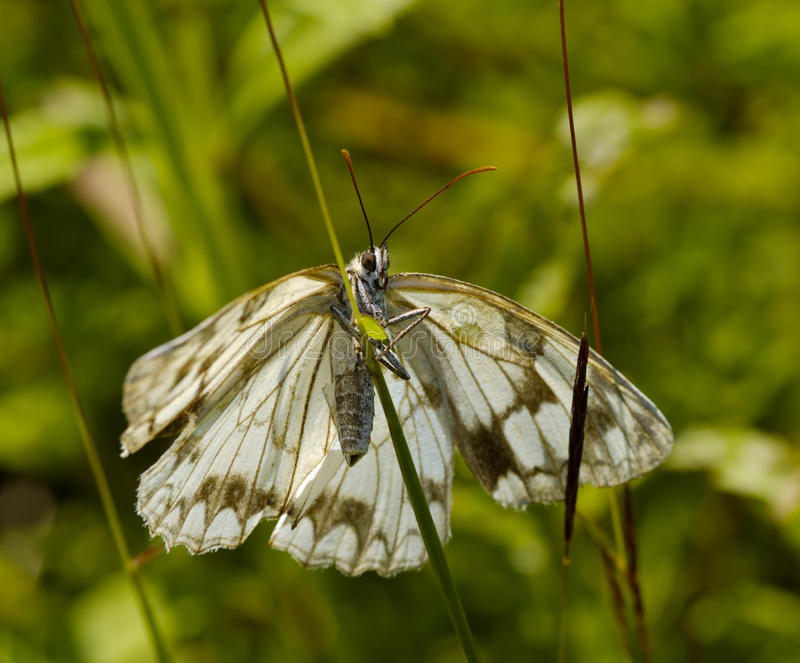The motley butterfly in a grass royalty free stock photo