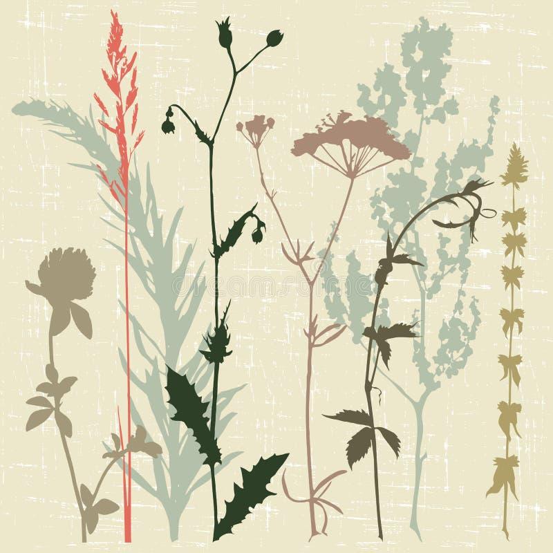 Motley grass stock illustration