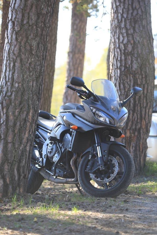 Moto de Kawasaki à la nuance sous les pins un jour ensoleillé lumineux photos stock