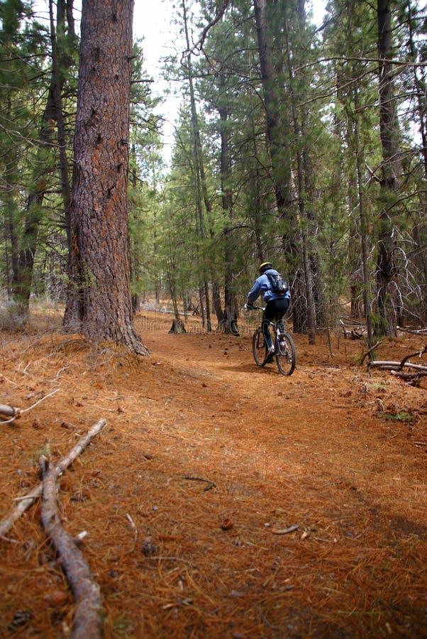 Motociclista da montanha na fuga da floresta das coníferas foto de stock royalty free
