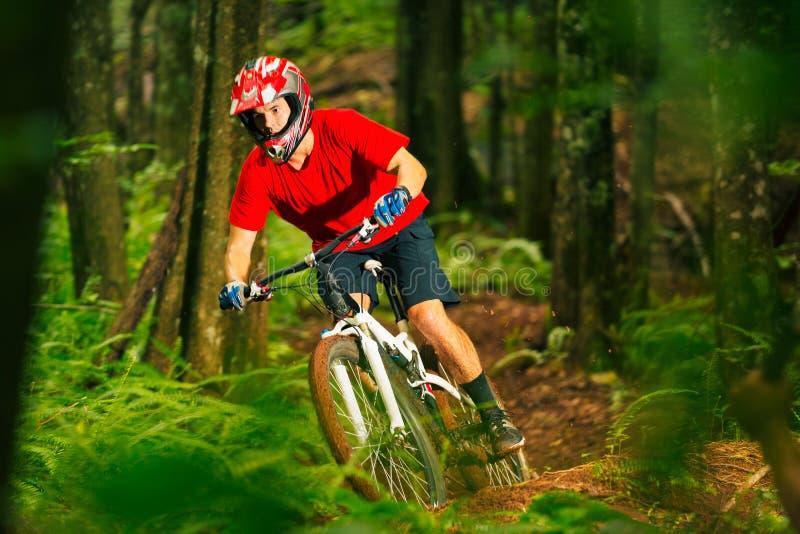 Motociclista da montanha que monta abaixo de Forest Trail fotografia de stock royalty free