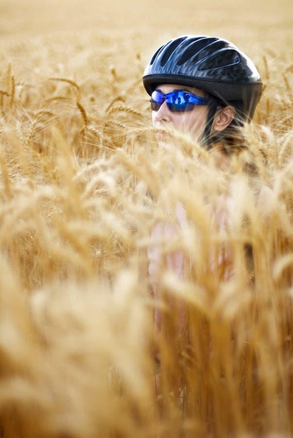 Motociclista no campo de trigo imagens de stock