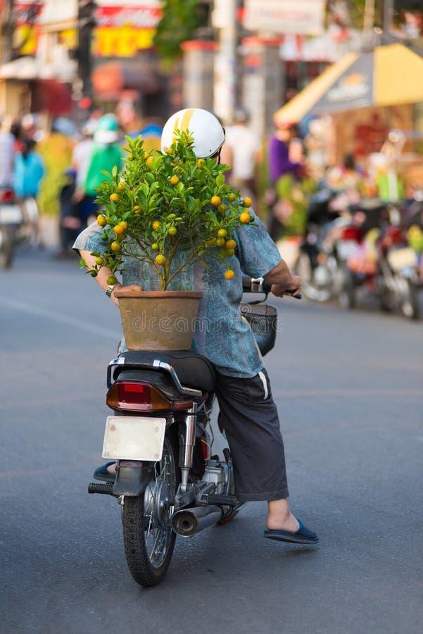 Motociclista vietnamiano com árvore de kumquat fotos de stock