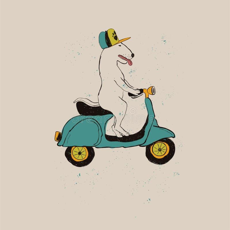 Motocyclette d'équitation de chien de bull-terrier illustration de vecteur