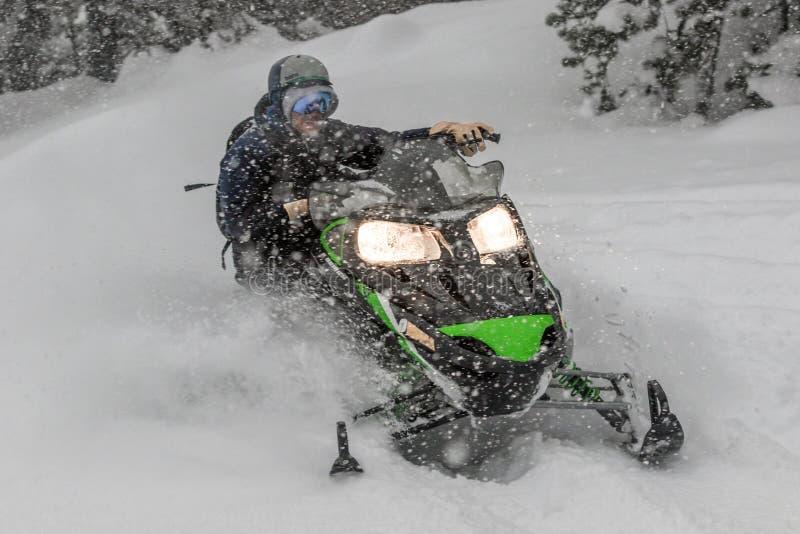 Motoneige à la grande vitesse tandis qu'il neige dans la forêt de pin photos stock