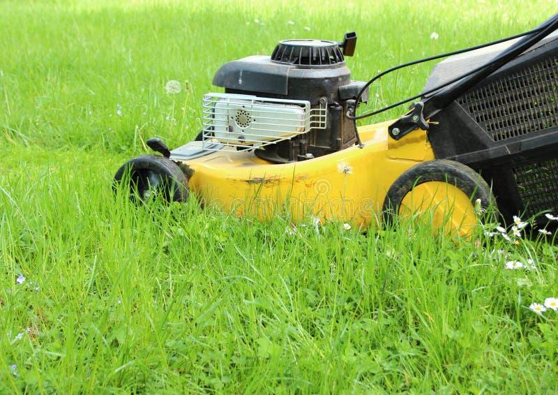 Motor del césped que corta la alta hierba en jardín fotos de archivo libres de regalías