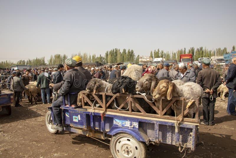 Motor die aanhangwagen van schapen, de Markt van het Zondagvee, Kas trekken royalty-vrije stock foto