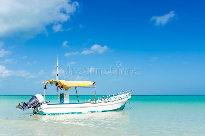 Motorboat and seagulls sitting on it in turquoise water in the Carribean royalty free stock image