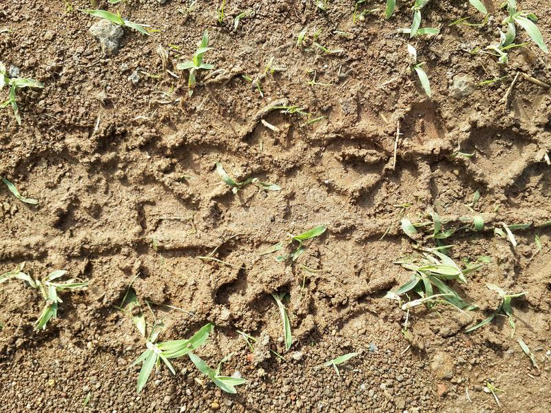 Motorcycle tire mark on wet soil photo from high angle. Tyre, closeup, top, view, mud royalty free stock photos