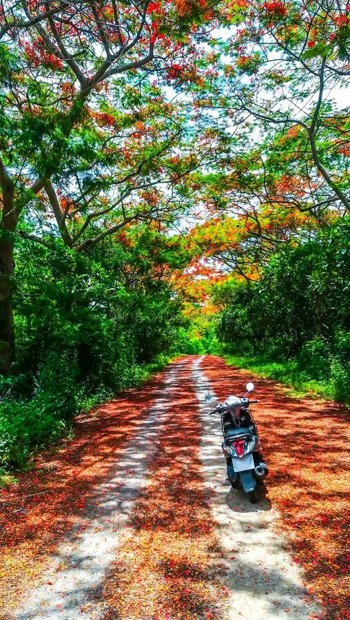Motorcykel i skog royaltyfri fotografi