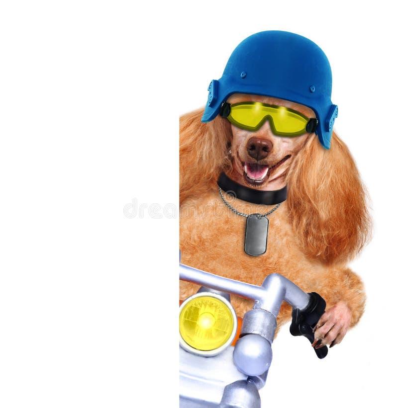 Motorcykelhund fotografering för bildbyråer