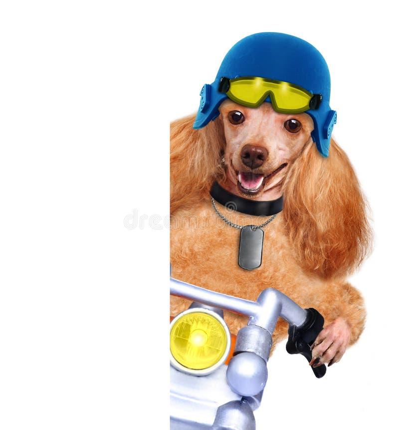 Motorcykelhund royaltyfri bild