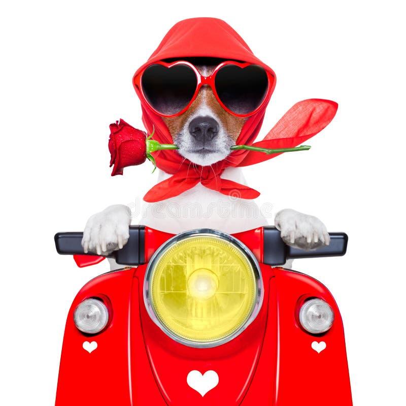 Motorcykelvalentinhund arkivfoton