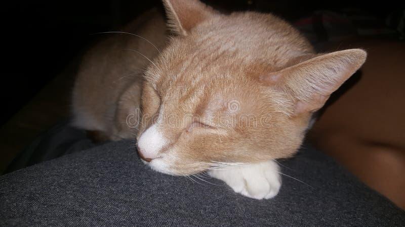 Motorino di sonno il gatto fotografie stock libere da diritti