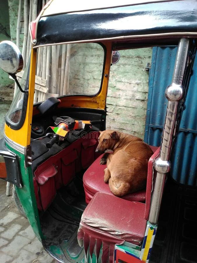Motorista do cão fotos de stock