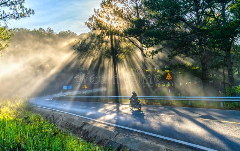 Motoristas que conducen en el camino a través de bosques del pino foto de archivo libre de regalías