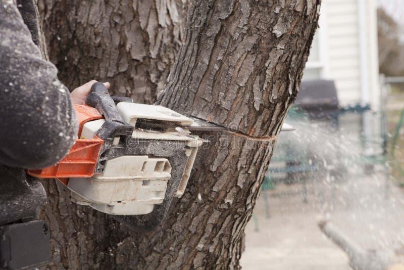 Motosega che incide albero immagini stock libere da diritti