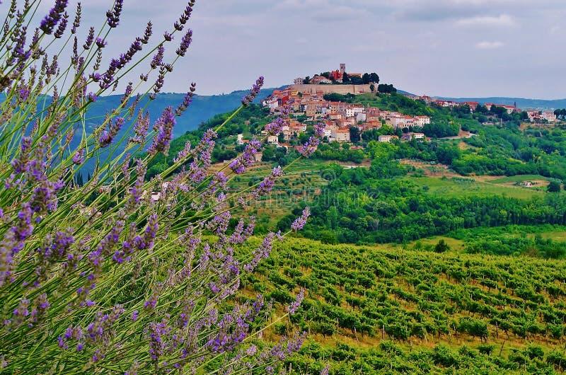 Motovun, Istria, Kroatië, Europa royalty-vrije stock foto's