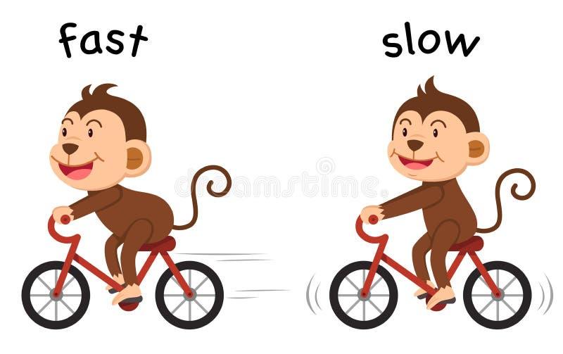 Motsatta ord fastar och den långsamma vektorn vektor illustrationer