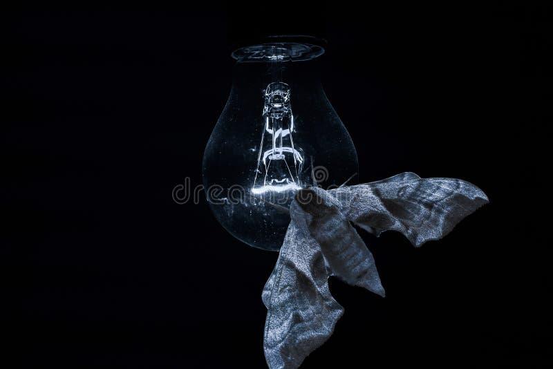 Motte auf einer Glühlampe stockbilder