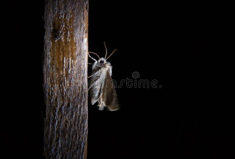 Motte bis zum Nacht lizenzfreie stockfotos