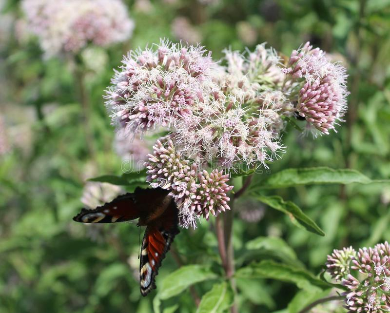 Motte sitzt auf einer Blume stockfotos
