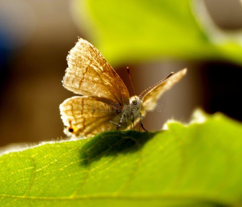 Motte und seine schönen Flügel stockfoto