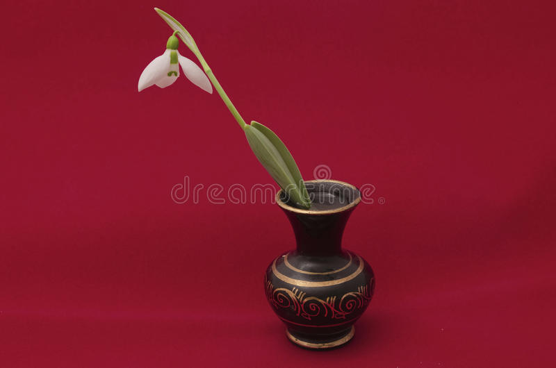 Mottled vase and snowdrop. (Galanthus nivalis) flower in red background stock photos