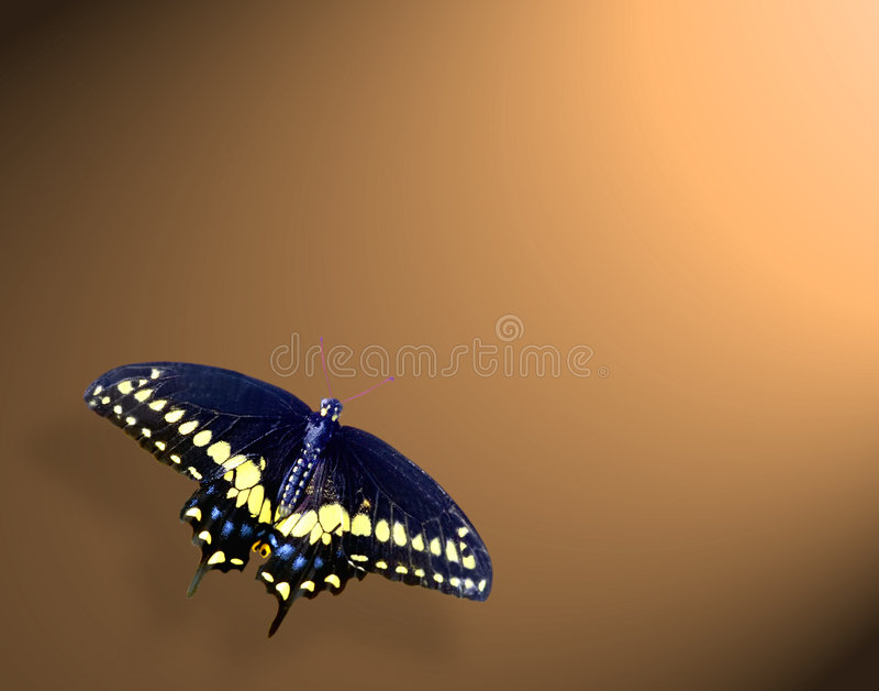 Download Motyl zdjęcie stock. Obraz złożonej z motyl, piękny, oskrzydlony - 129414