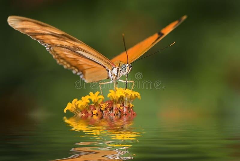 Download Motyl zdjęcie stock. Obraz złożonej z czerwień, greenbacks - 7802354