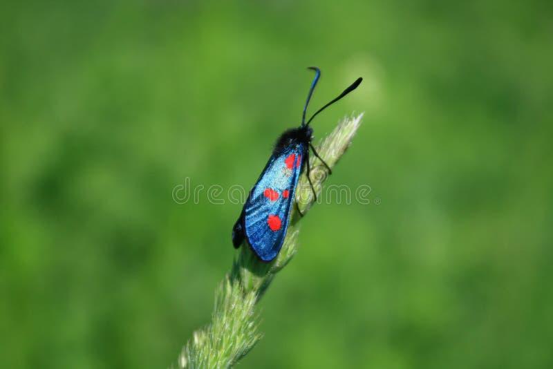 motyl bright zdjęcie stock