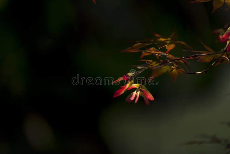Motyl goni kwiatu obraz royalty free
