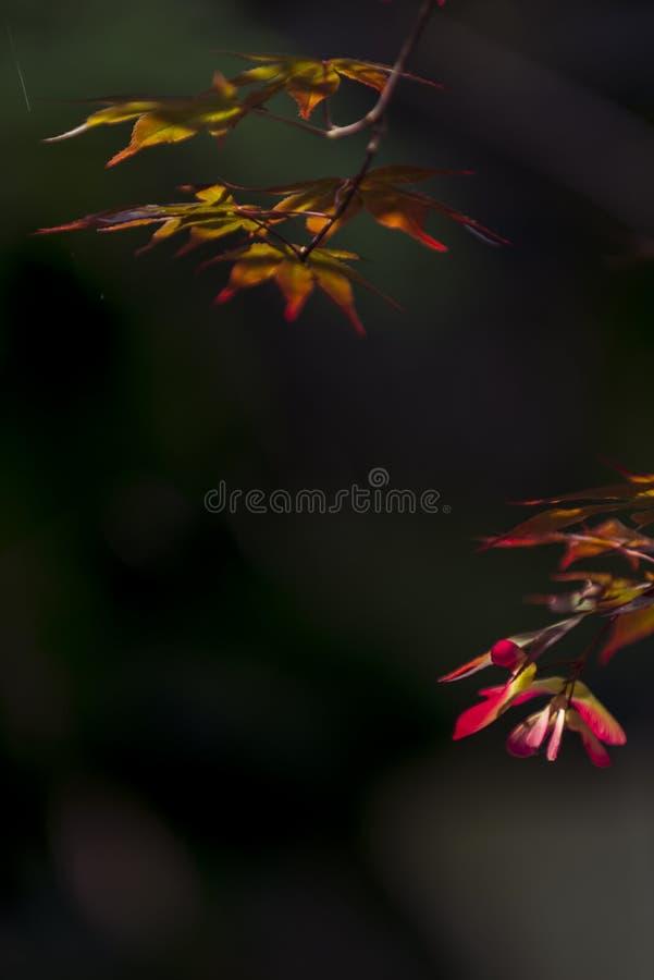 Motyl goni kwiatu fotografia stock