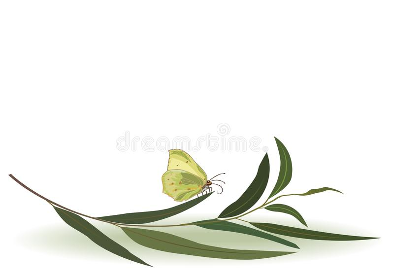 Motyl i eukaliptus ilustracja wektor
