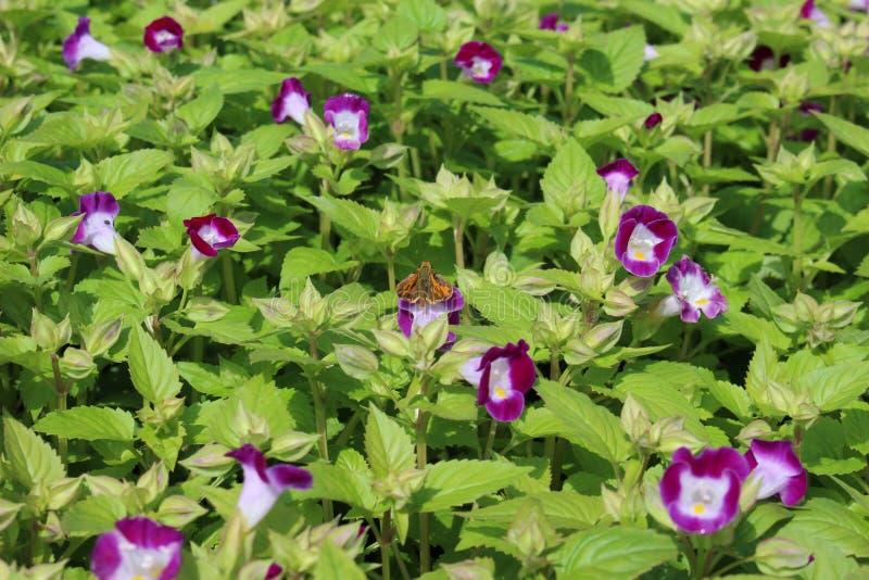 Motyl i kwiaty zdjęcia stock