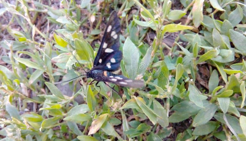 Motyl, insekt, najlepszy ilustracja, najlepszy natura ilustracji