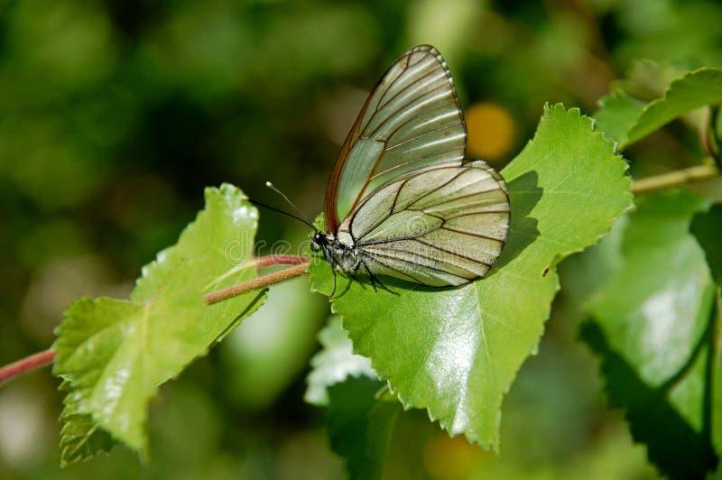 Motyl Jaskrawy i piękny moment obraz stock