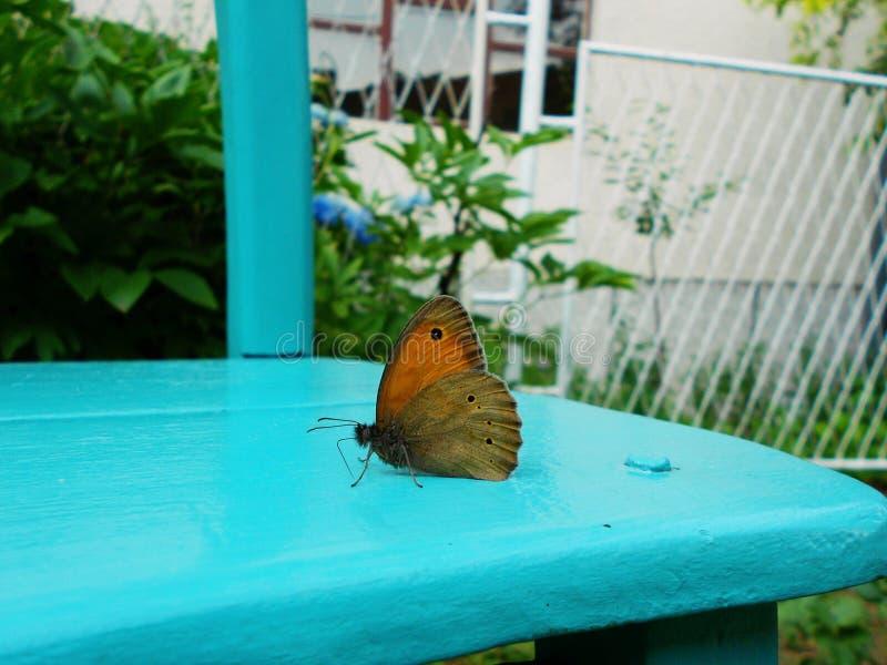 Motyl, Motyli skrzydła, Motyli zbliżenie, Macrocphotography obrazy royalty free