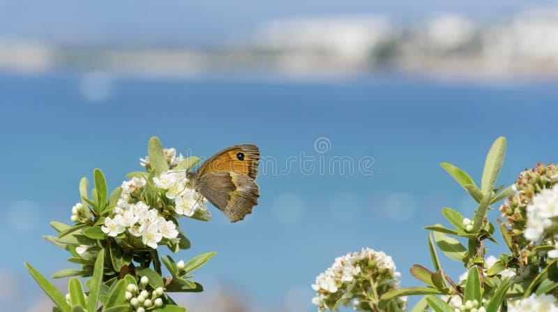 Motyl na biali kwiaty tło fiordów morza promieni słońca obrazy stock