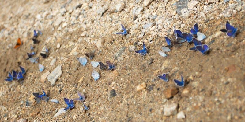 Motyl na drodze zdjęcie royalty free