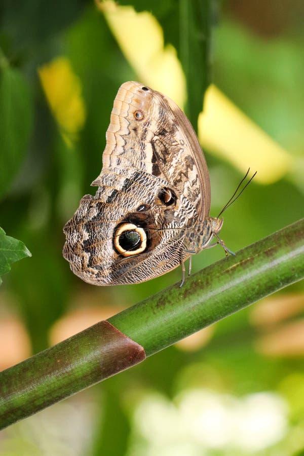 Motyl na gałąź drzewo zdjęcie stock