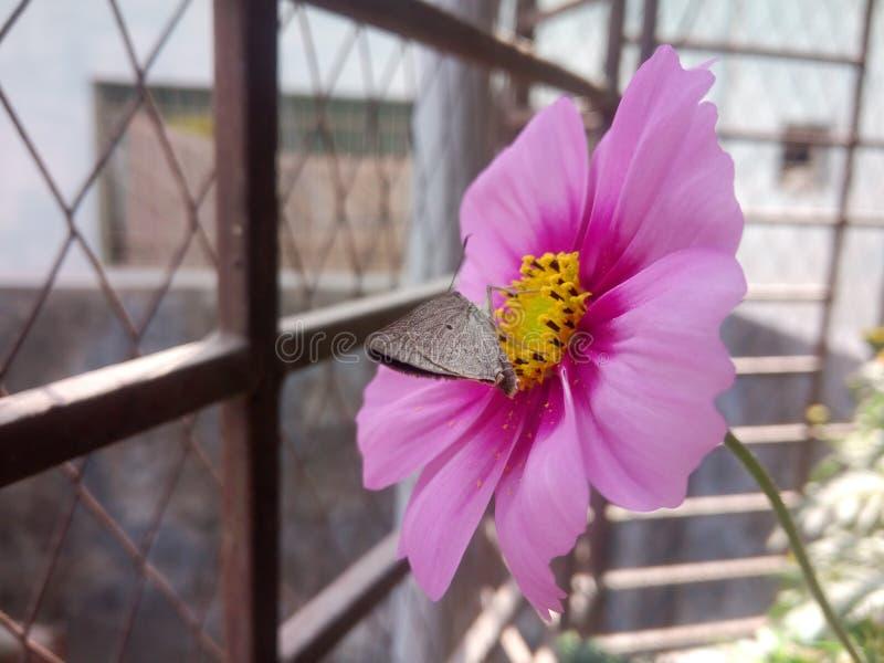 Motyl na kwiacie fotografia royalty free